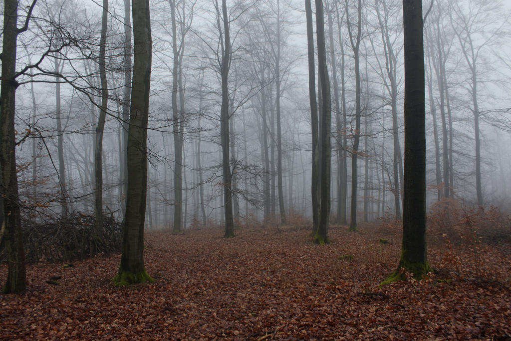 foggy forest by a - photo #16