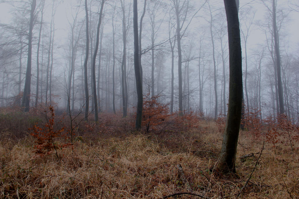 foggy forest by a - photo #23
