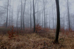 Foggy Forest 31 by sacral-stock