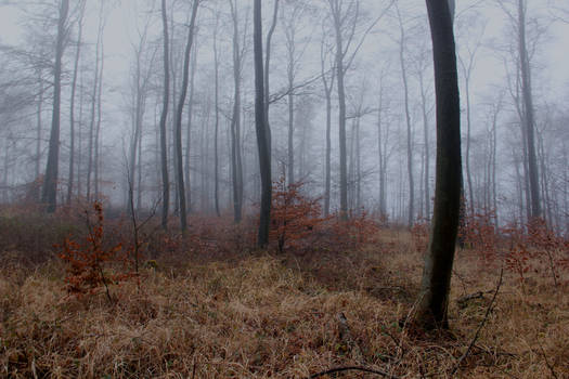 Foggy Forest 31