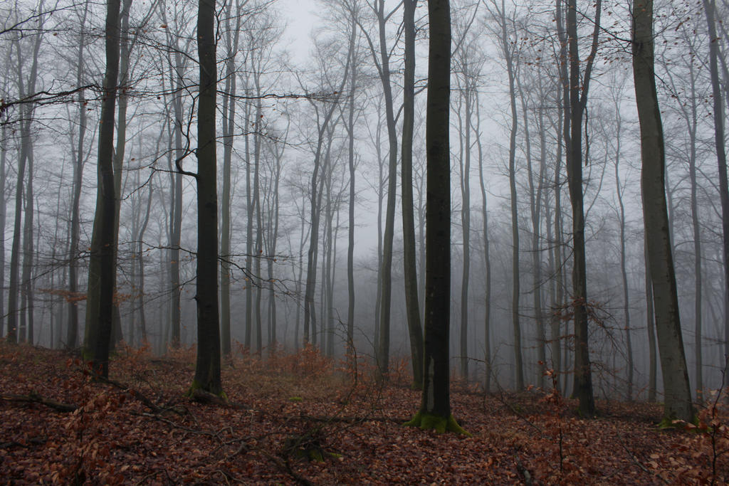 foggy forest by a - photo #5