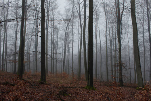 Foggy Forest 30