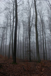 Foggy Forest 28 by sacral-stock