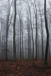 Foggy Forest 27