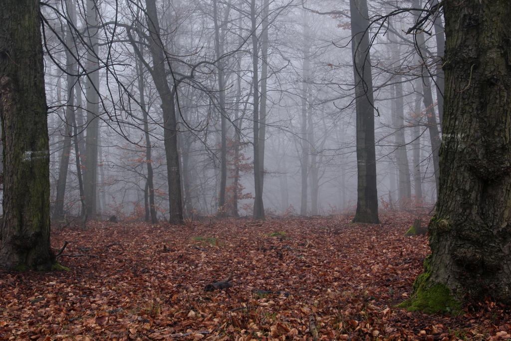 foggy forest by a - photo #2