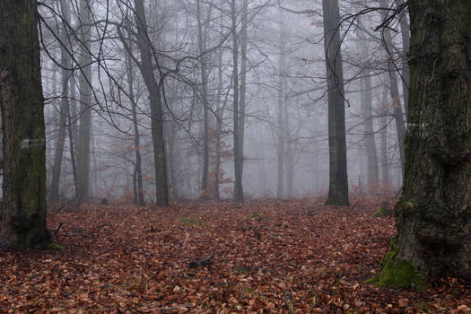 Foggy Forest 26