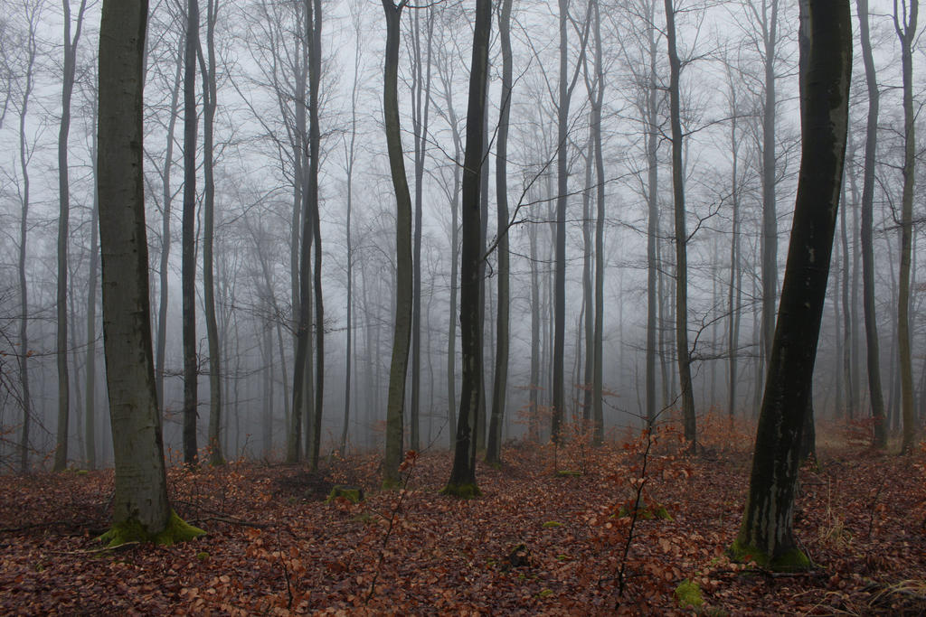 foggy forest by a - photo #36