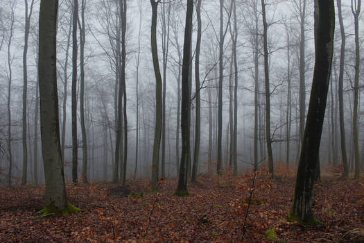Foggy Forest 25