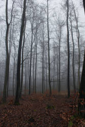 Foggy Forest 24 by sacral-stock