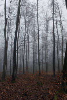 Foggy Forest 24