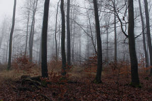 Foggy Forest 22 by sacral-stock