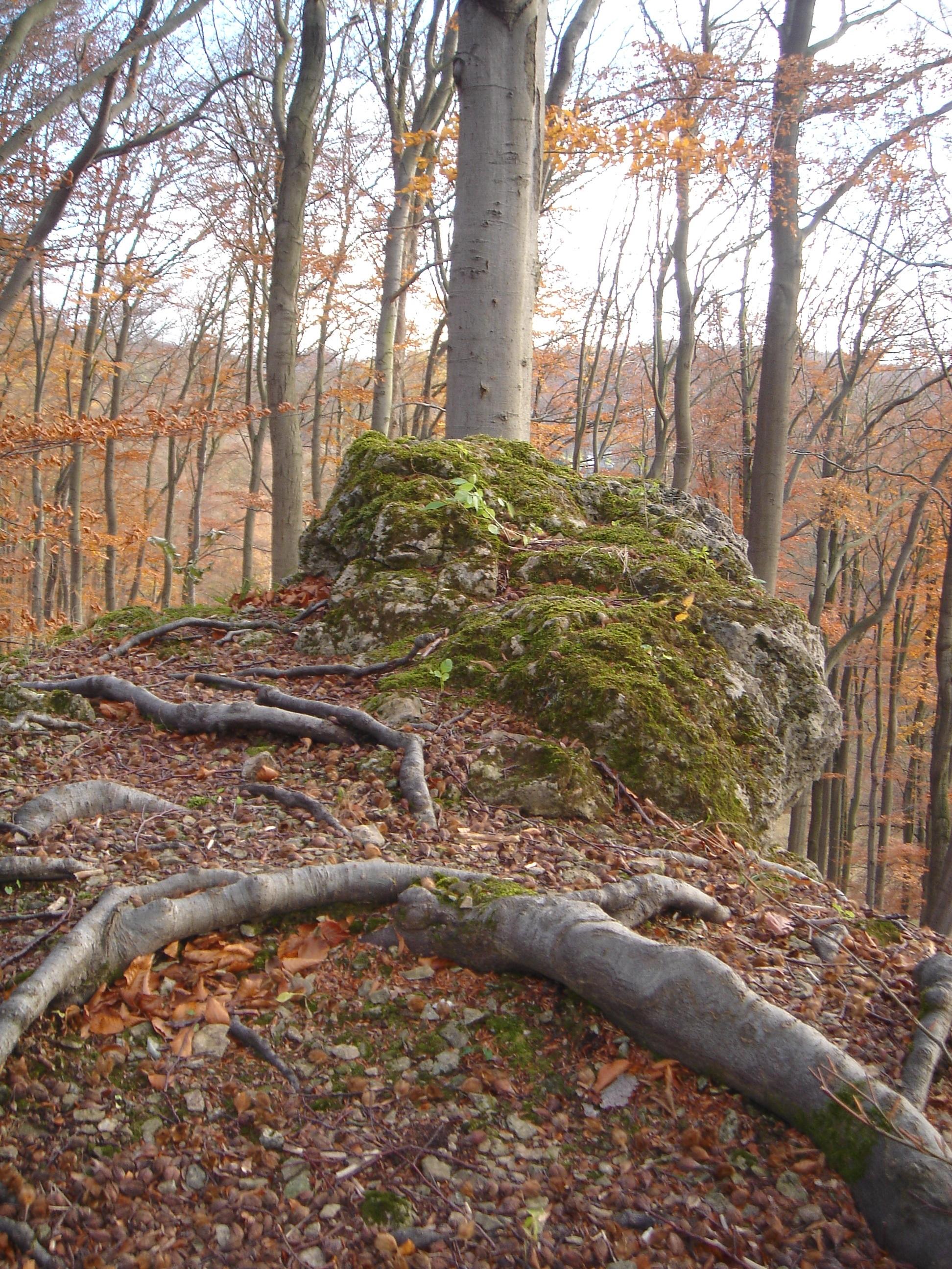 Altenstein - tree 4 by sacral-stock
