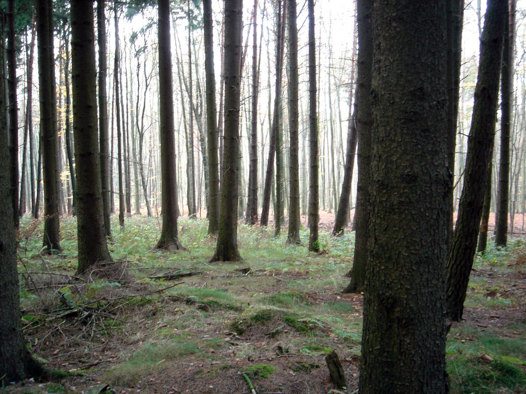 forest 6 by sacral-stock