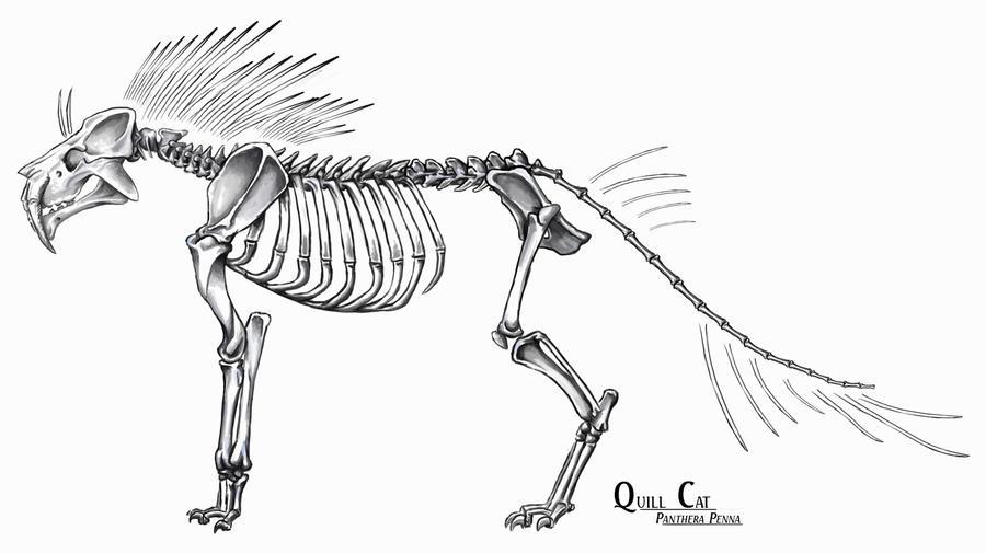Quill Cat Skeleton by YasminFoster on DeviantArt