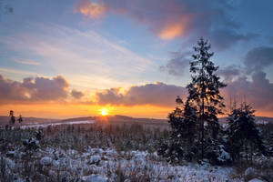 winter forest sunset by artmobe