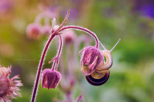 snail 2 by artmobe