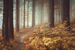 Grimms Forest