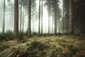 Silent Woods by artmobe