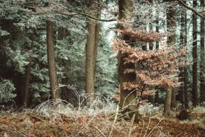 Frozen Forest by artmobe