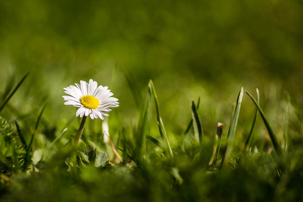 Springtime 03 by artmobe