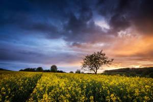 May Sunset by artmobe