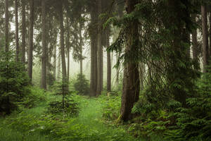 Green Forest by artmobe