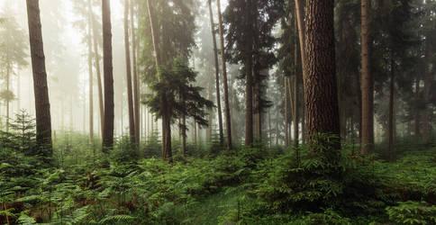 Summerwoods by artmobe