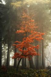 Red Beautiful by artmobe