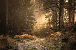 Follow the Light by artmobe