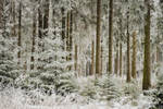 White Forest 1 by artmobe