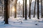 Meissner 2021 Winter 03