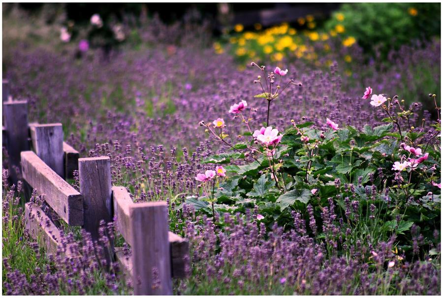 Wildflower field.