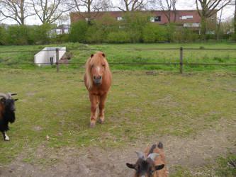 pony by dekleinewildebizon