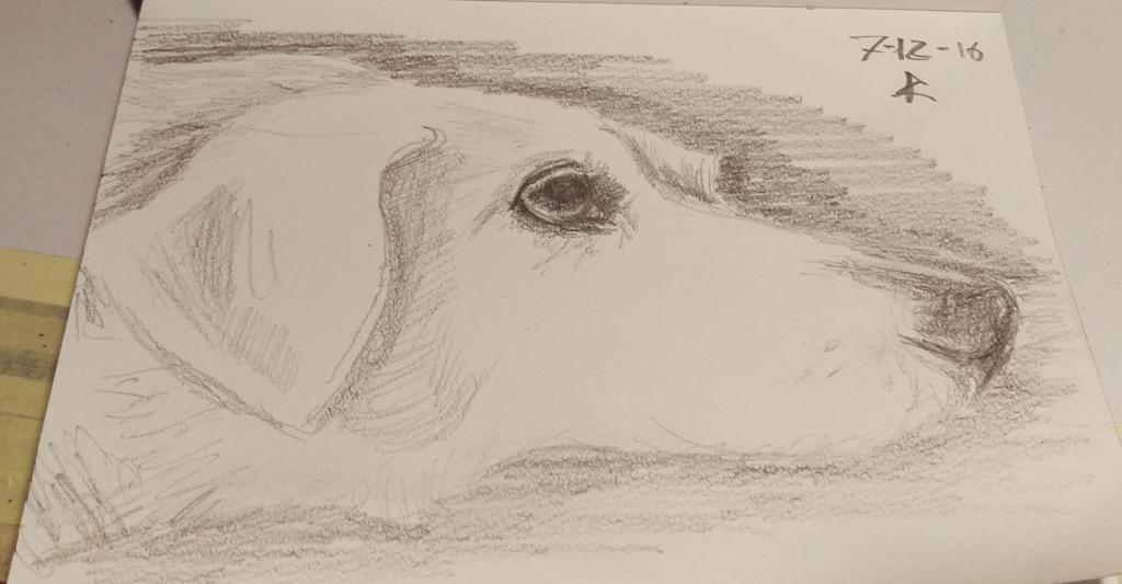 Tired doge by Ali-Radicali