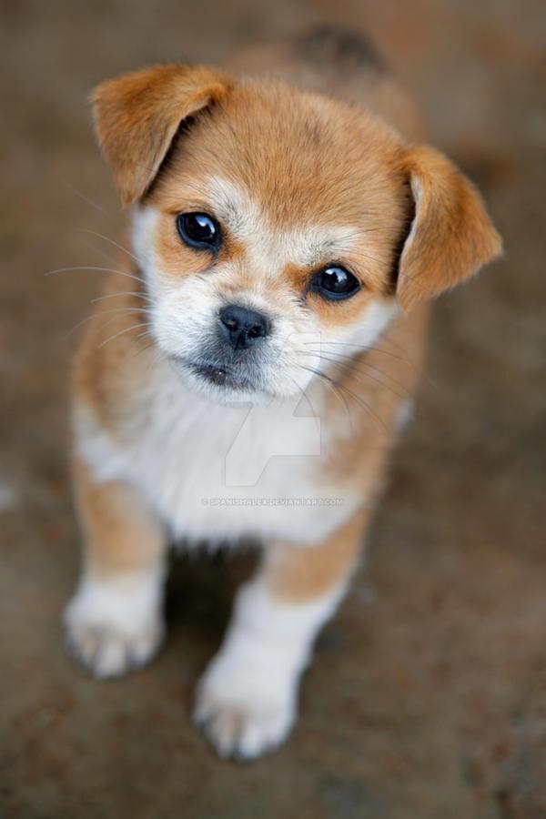 Puppy by Spanishalex