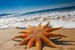 Beautful Beach Starfish
