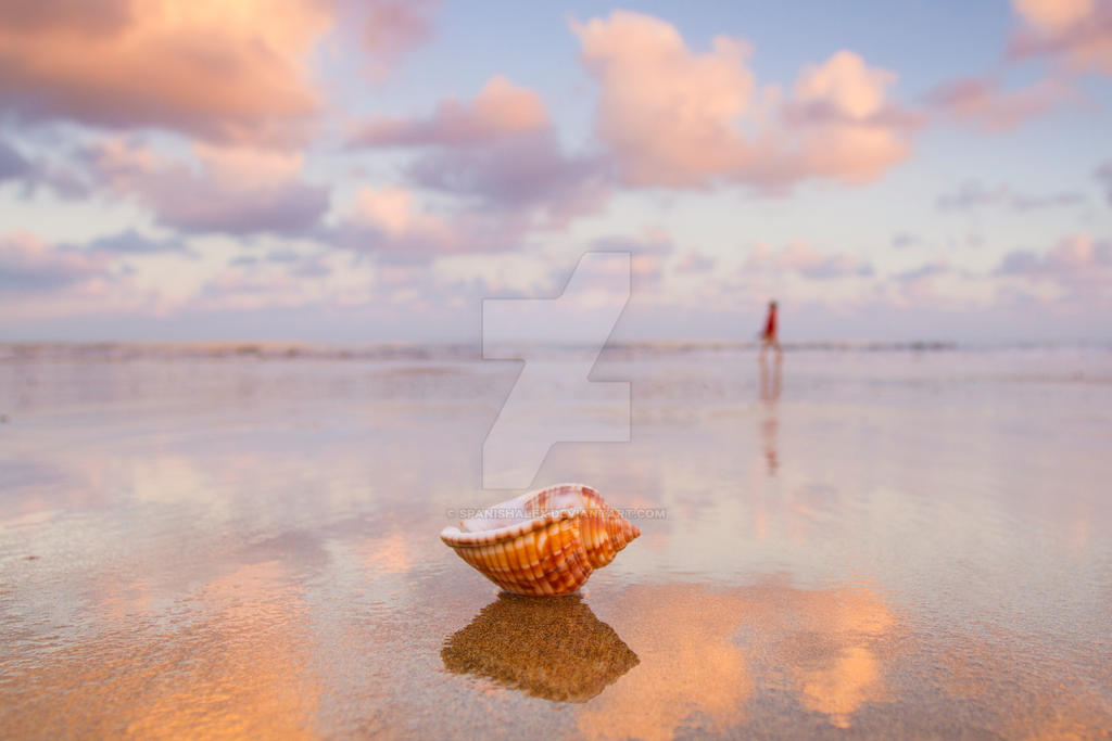 Dawn Seashell by Spanishalex
