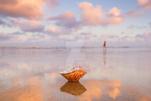 Dawn Seashell