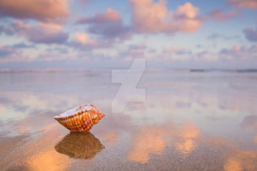 Dawn Seashell 2