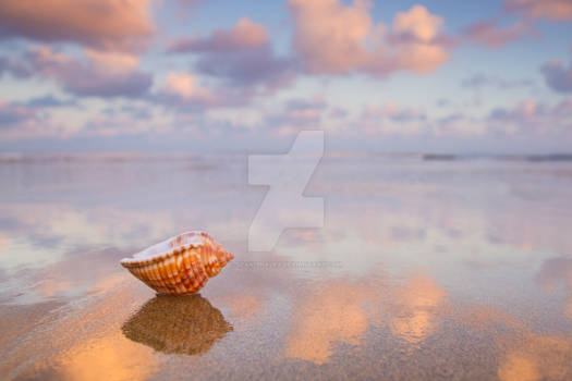 Dawn Seashell 2