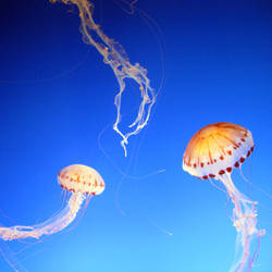 Floating In The Blue by iainhallam