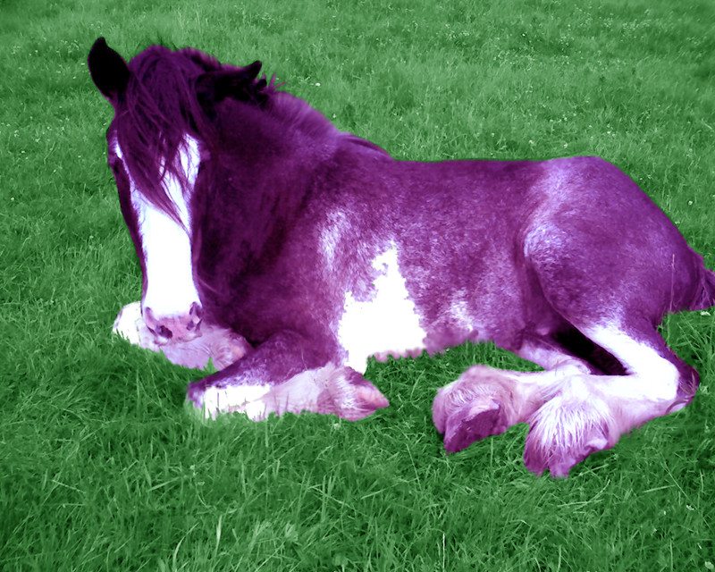 Christmas List Purple_Poney_by_Velocity_Acrid_Vein