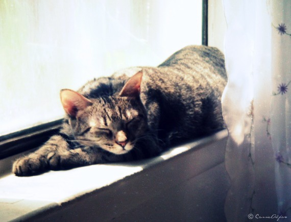 Nap Time by CassieStarFox