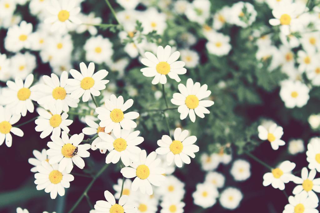 Flower Patch by CassieStarFox