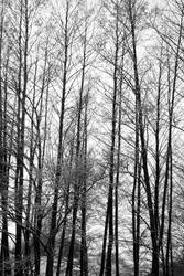 winter's tall