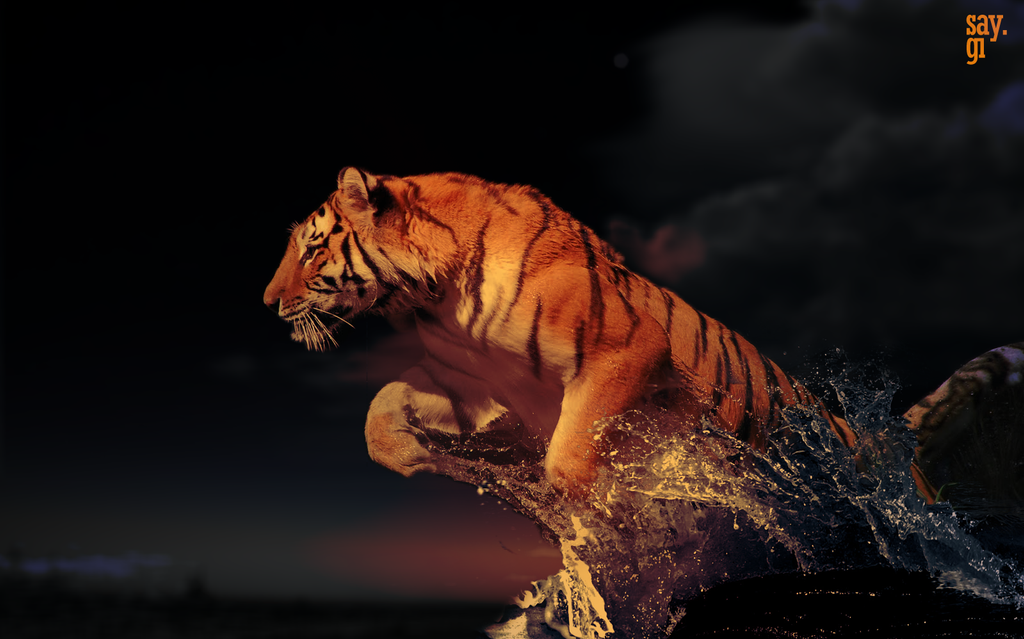 [Immagine: powerful_tiger_in_water_by_thesaygi-d4sifof.png]