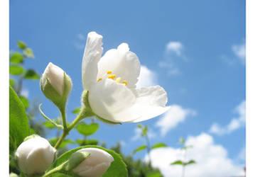 flower by Reatrd