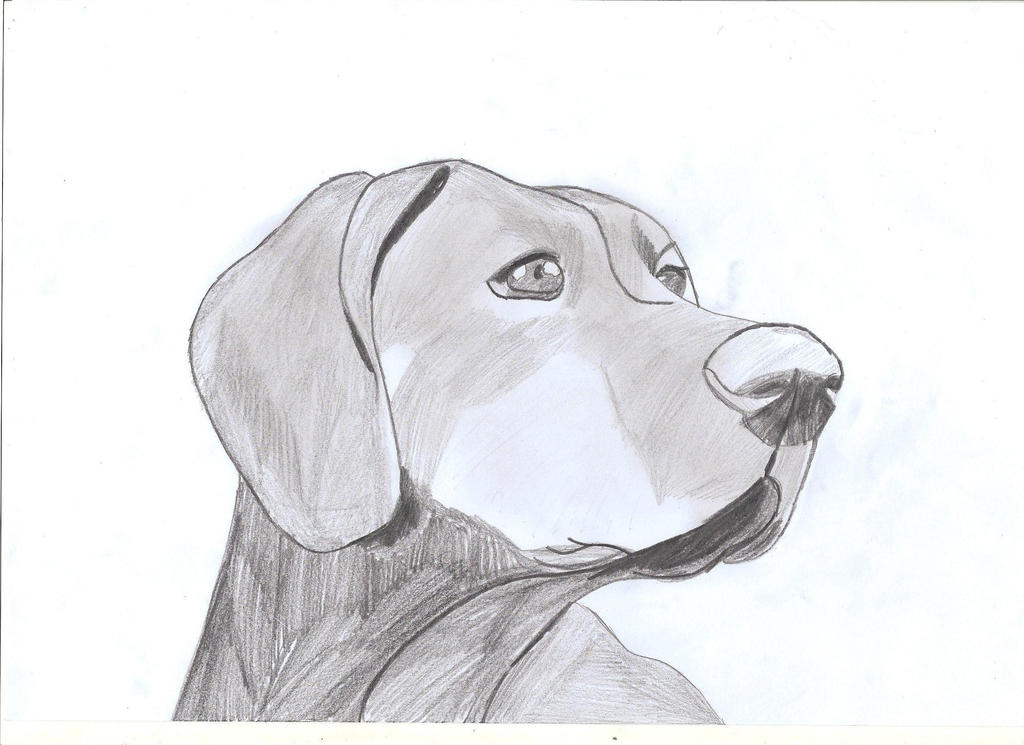 Realistic Dog Drawing Step By Step Realistic Dog        pencil