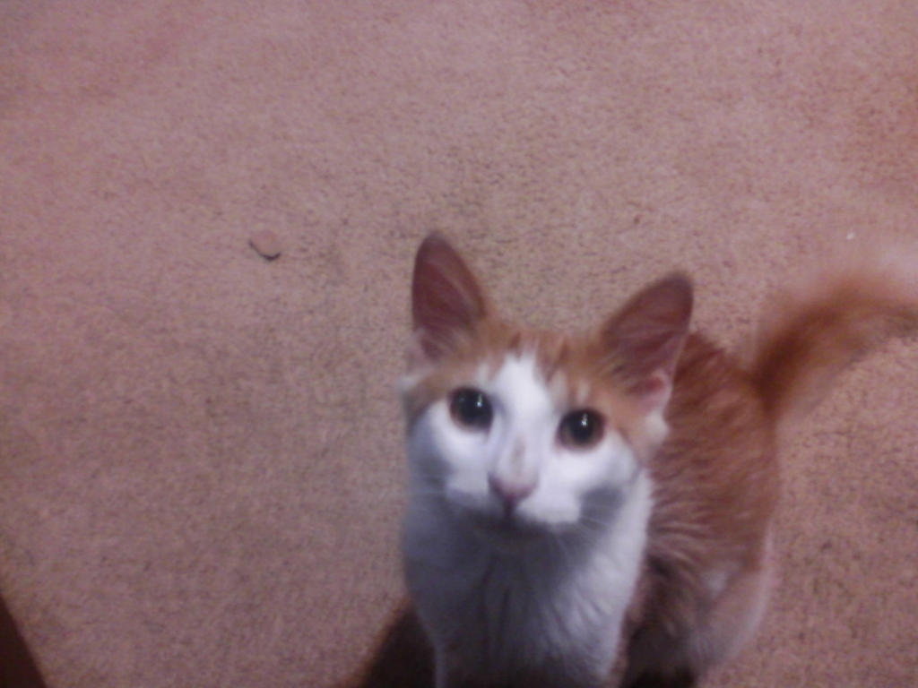 My kitty Stampy by nauticlord1