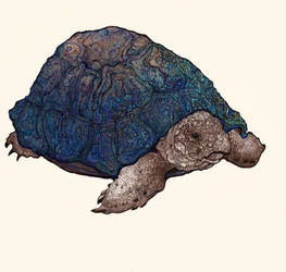 Turtle II Blue by Chobek